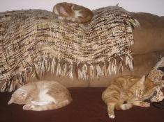 3 cats